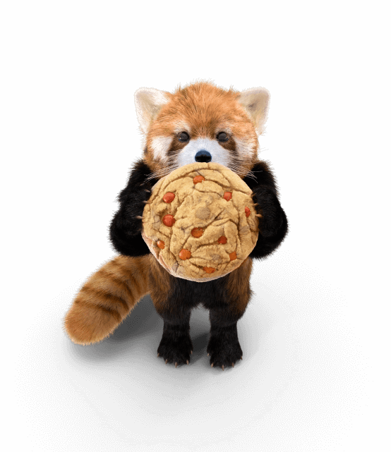 Red Panda With Cookie